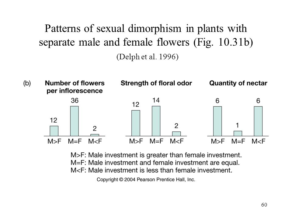 Patterns of sexual dimorphism in plants with separate male and female flowers (Fig.