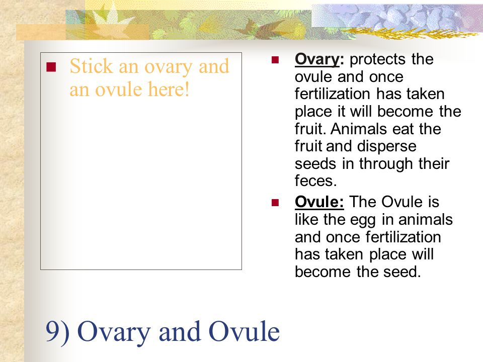 9) Ovary and Ovule Stick an ovary and an ovule here!