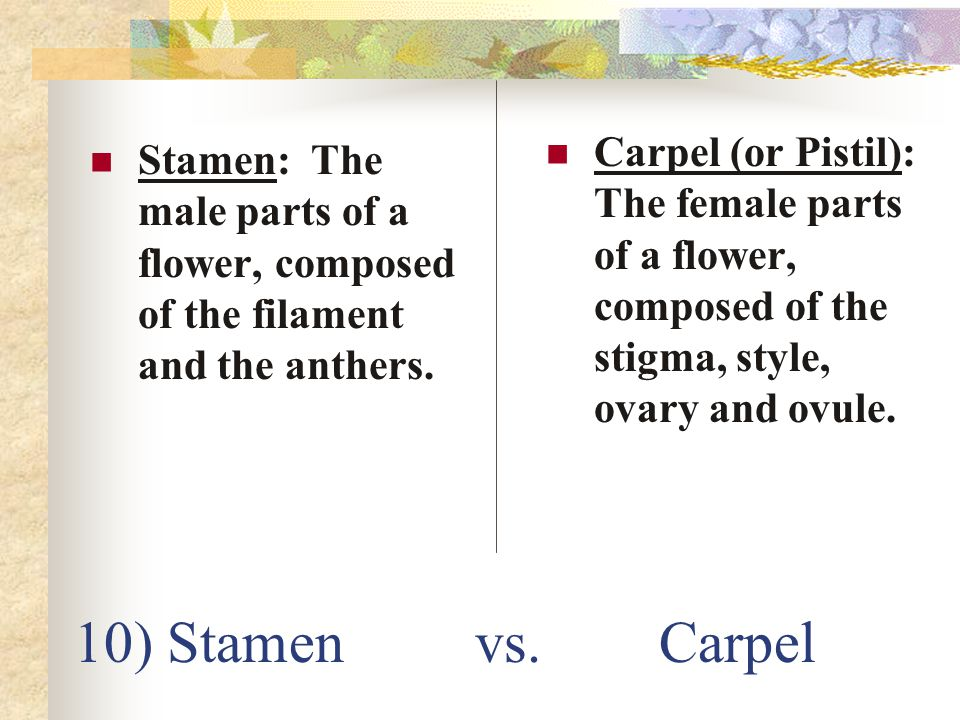 Carpel (or Pistil): The female parts of a flower, composed of the stigma, style, ovary and ovule.