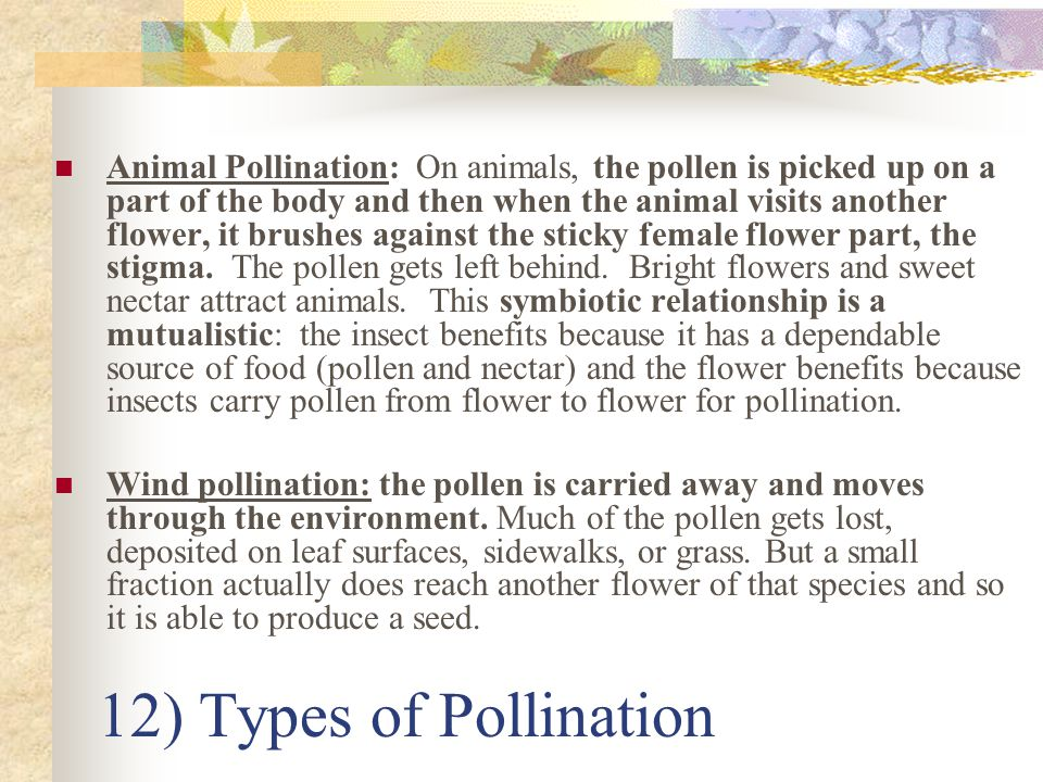 Animal Pollination: On animals, the pollen is picked up on a part of the body and then when the animal visits another flower, it brushes against the sticky female flower part, the stigma. The pollen gets left behind. Bright flowers and sweet nectar attract animals. This symbiotic relationship is a mutualistic: the insect benefits because it has a dependable source of food (pollen and nectar) and the flower benefits because insects carry pollen from flower to flower for pollination.