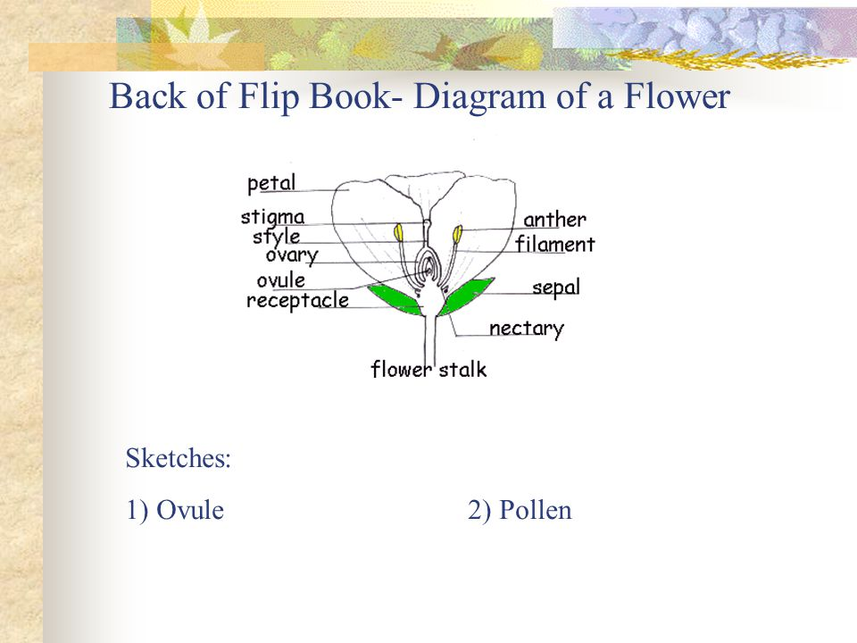 Back of Flip Book- Diagram of a Flower