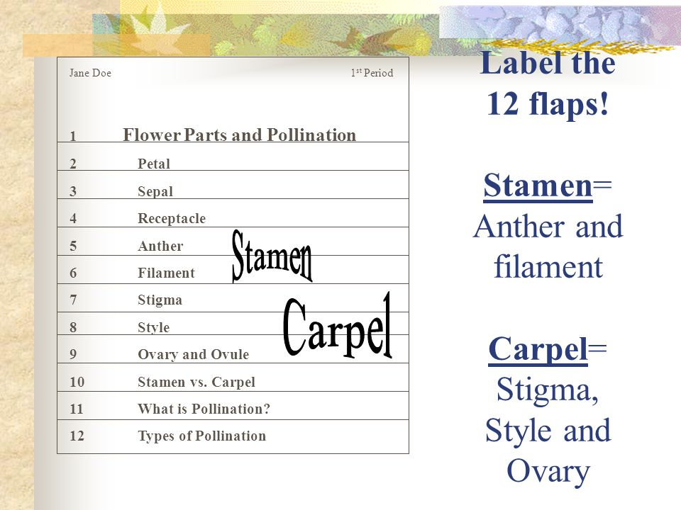 Label the 12 flaps! Stamen= Anther and filament Carpel= Stigma, Style and Ovary