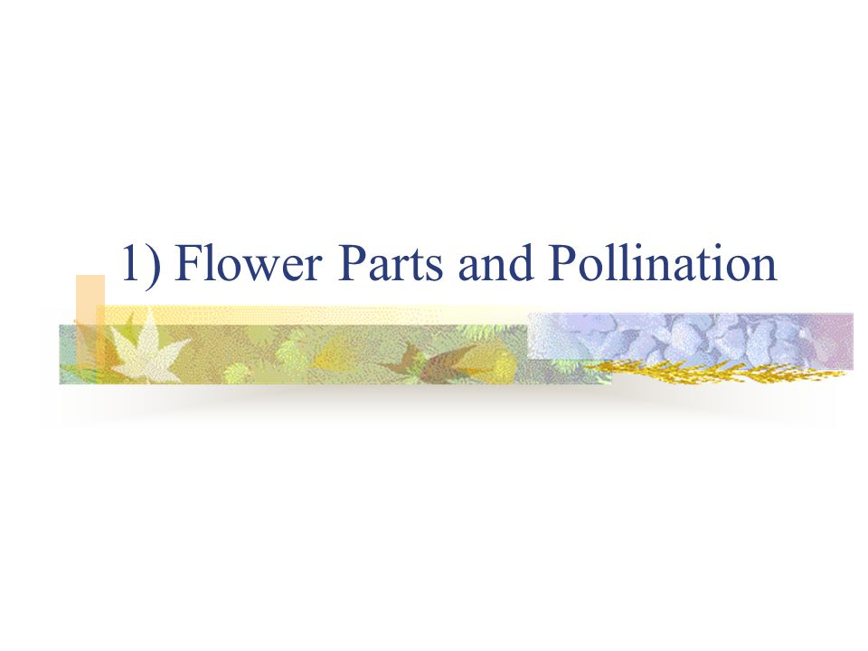 1) Flower Parts and Pollination