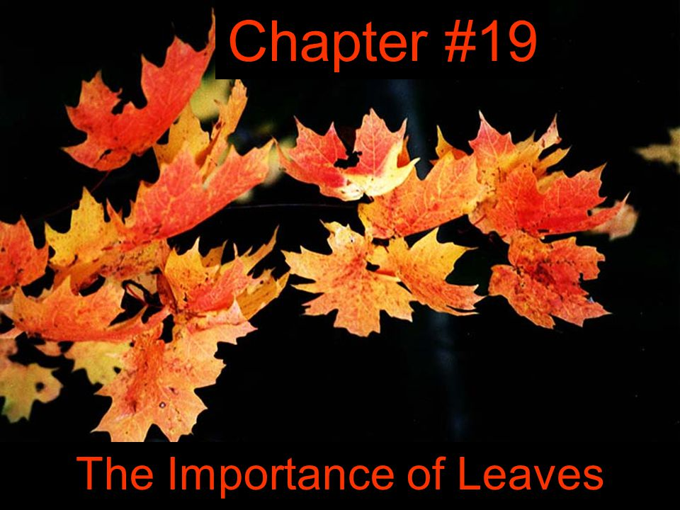 The Importance of Leaves