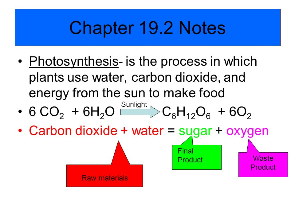 Chapter 19.2 Notes Photosynthesis- is the process in which plants use water, carbon dioxide, and energy from the sun to make food.