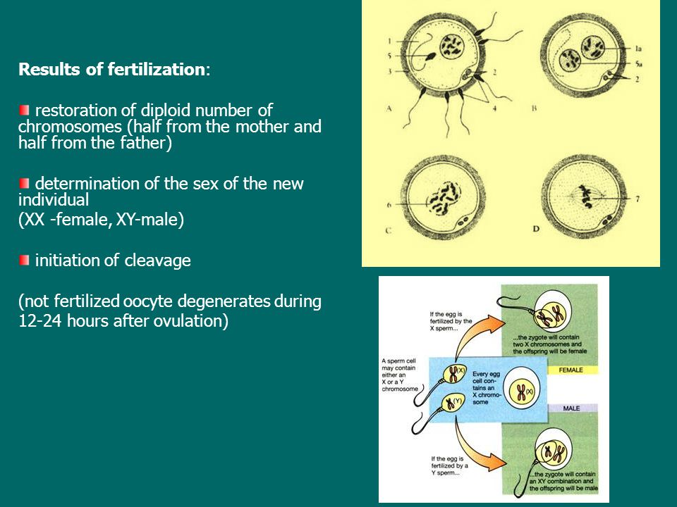 Results of fertilization: