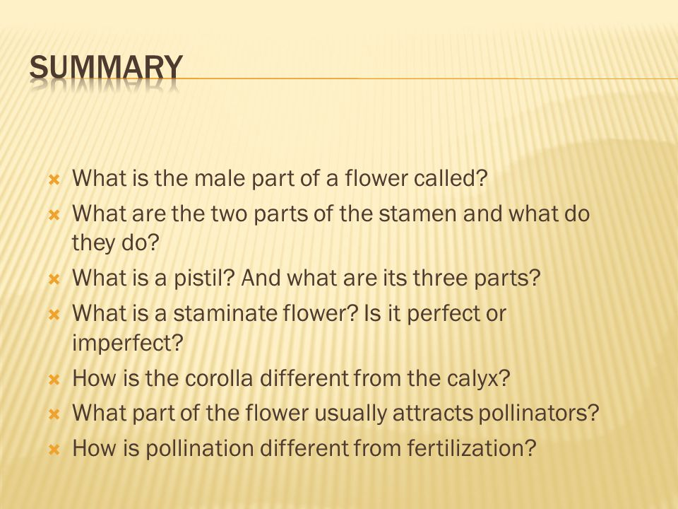 Summary What is the male part of a flower called