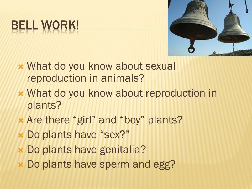 Bell Work! What do you know about sexual reproduction in animals