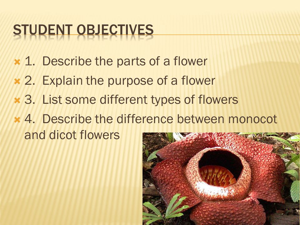 Student Objectives 1. Describe the parts of a flower