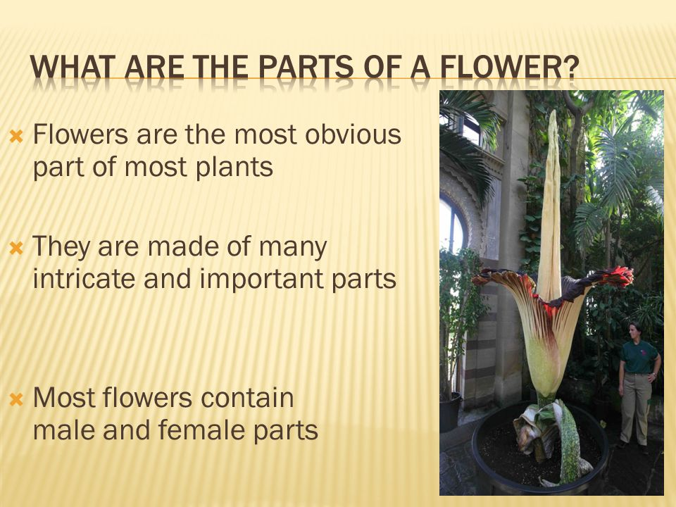 What Are the Parts of A Flower