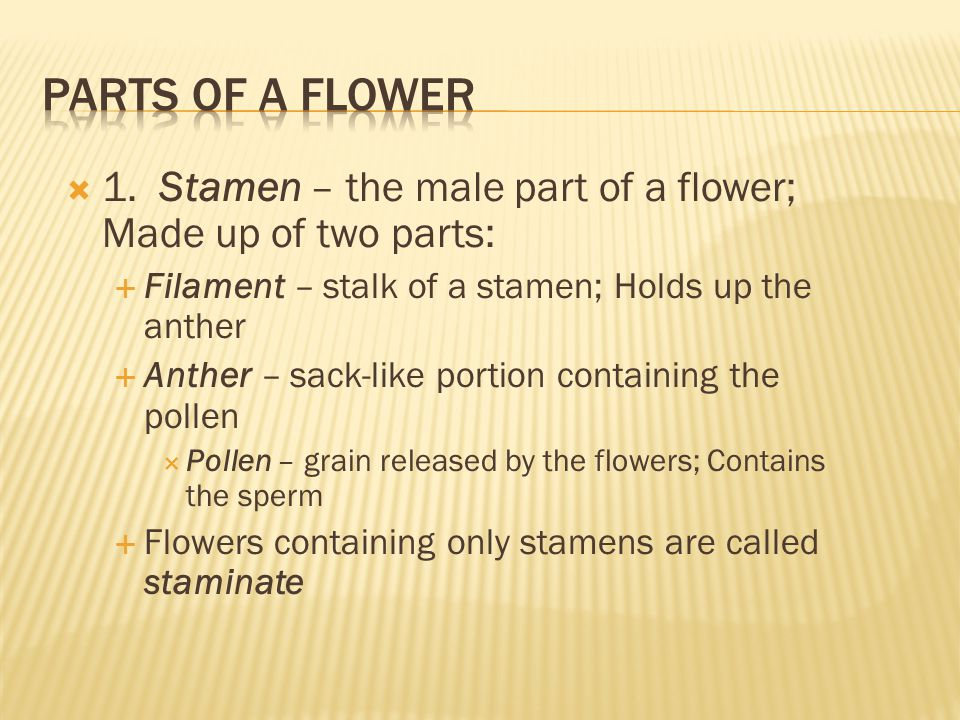 Parts of a Flower 1. Stamen – the male part of a flower; Made up of two parts: Filament – stalk of a stamen; Holds up the anther.