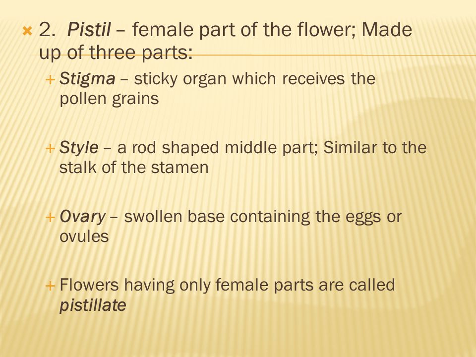 2. Pistil – female part of the flower; Made up of three parts: