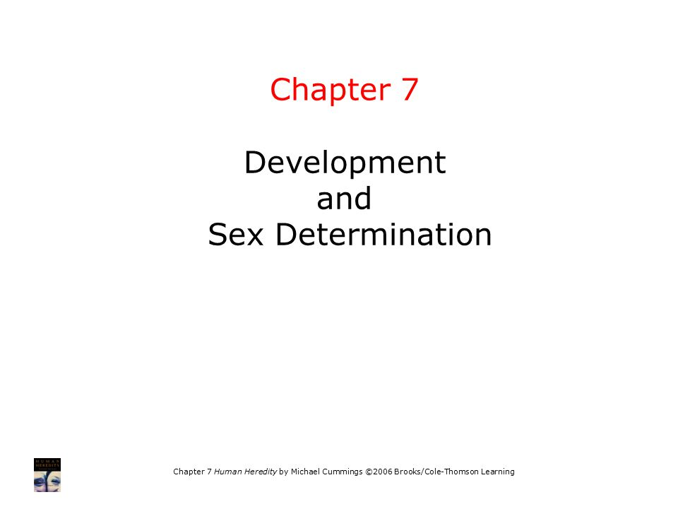 Chapter 7 Development and Sex Determination