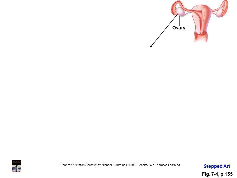 Ovary Stepped Art Fig. 7-4, p.155