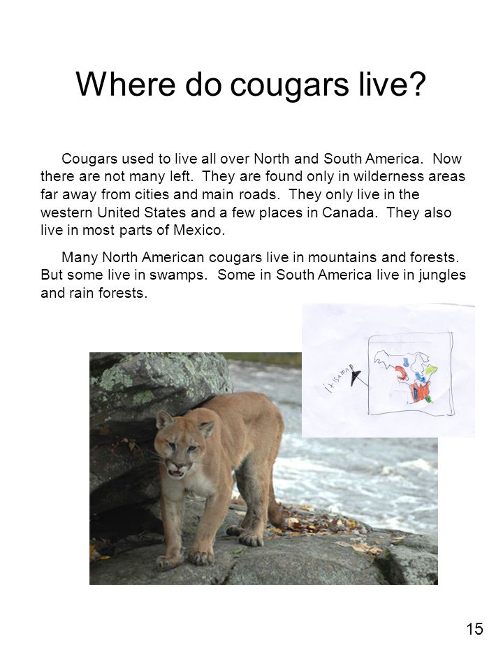 Where do cougars live