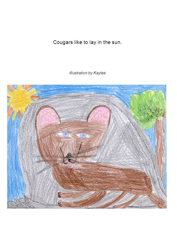 Cougars like to lay in the sun. Illustration by Kaylee