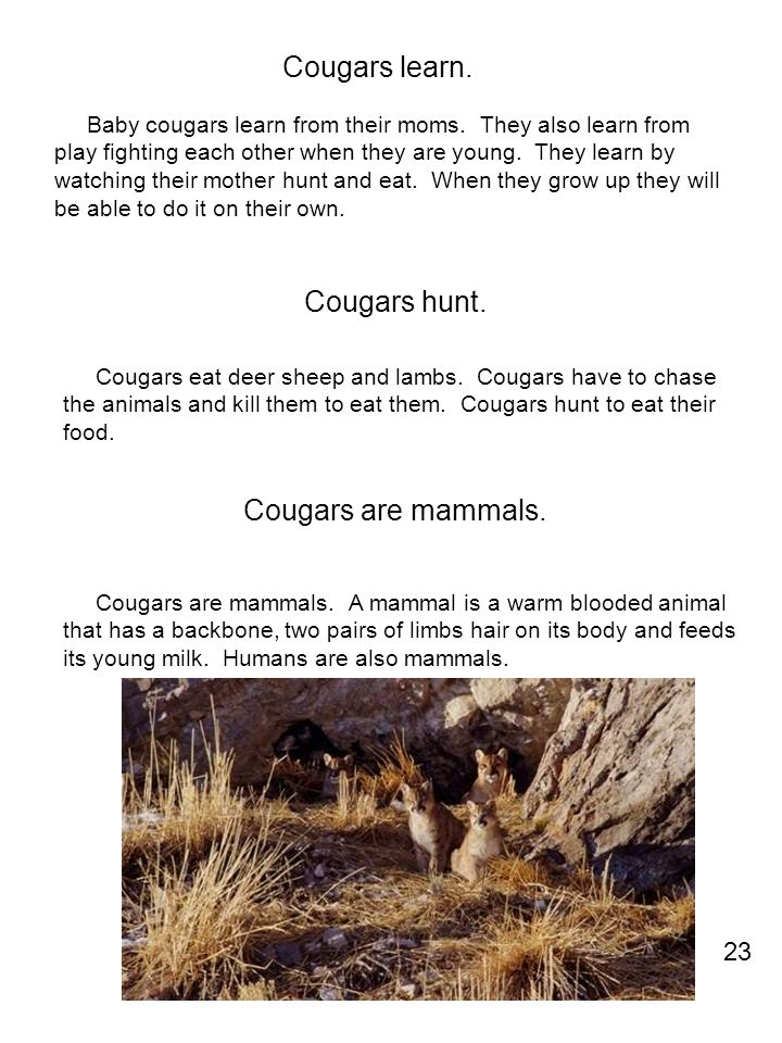 Cougars learn. Cougars hunt. Cougars are mammals. 23