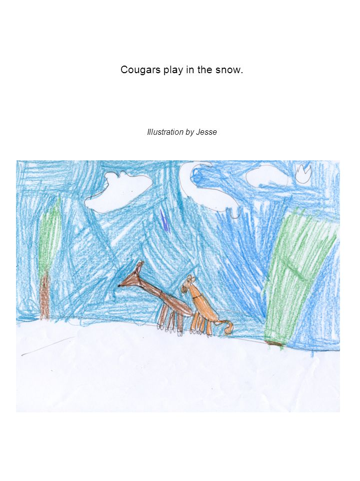 Cougars play in the snow. Illustration by Jesse
