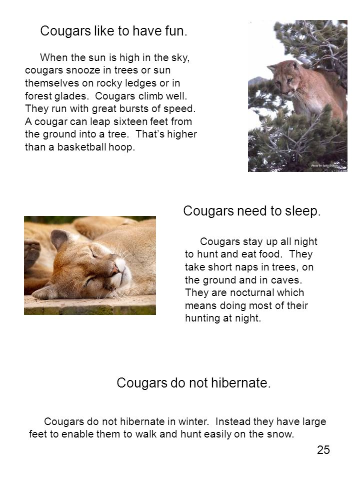 Cougars like to have fun.