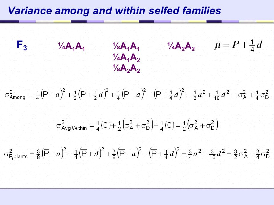 Variance among and within selfed families