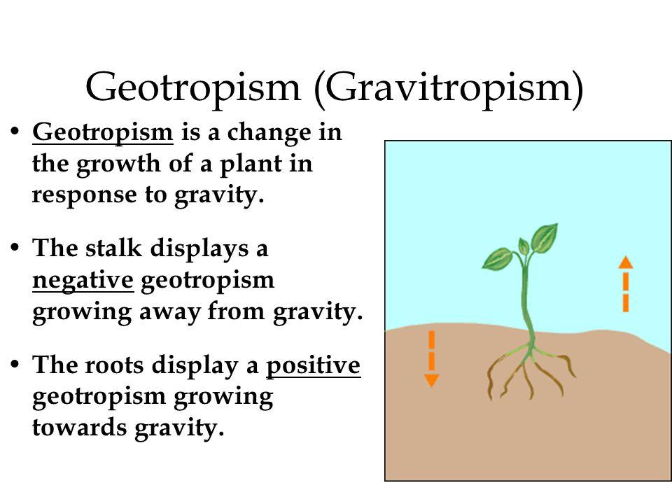 Geotropism (Gravitropism)
