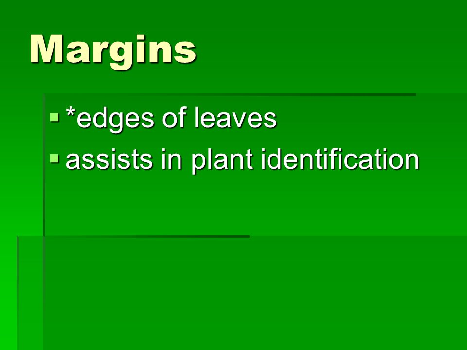 Margins *edges of leaves assists in plant identification