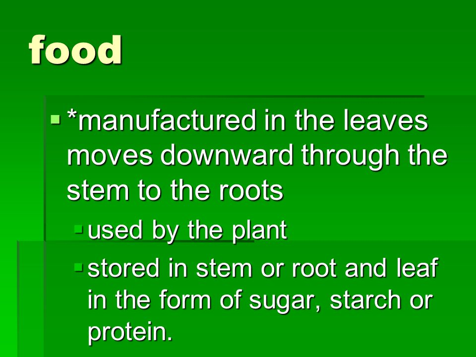 food *manufactured in the leaves moves downward through the stem to the roots. used by the plant.