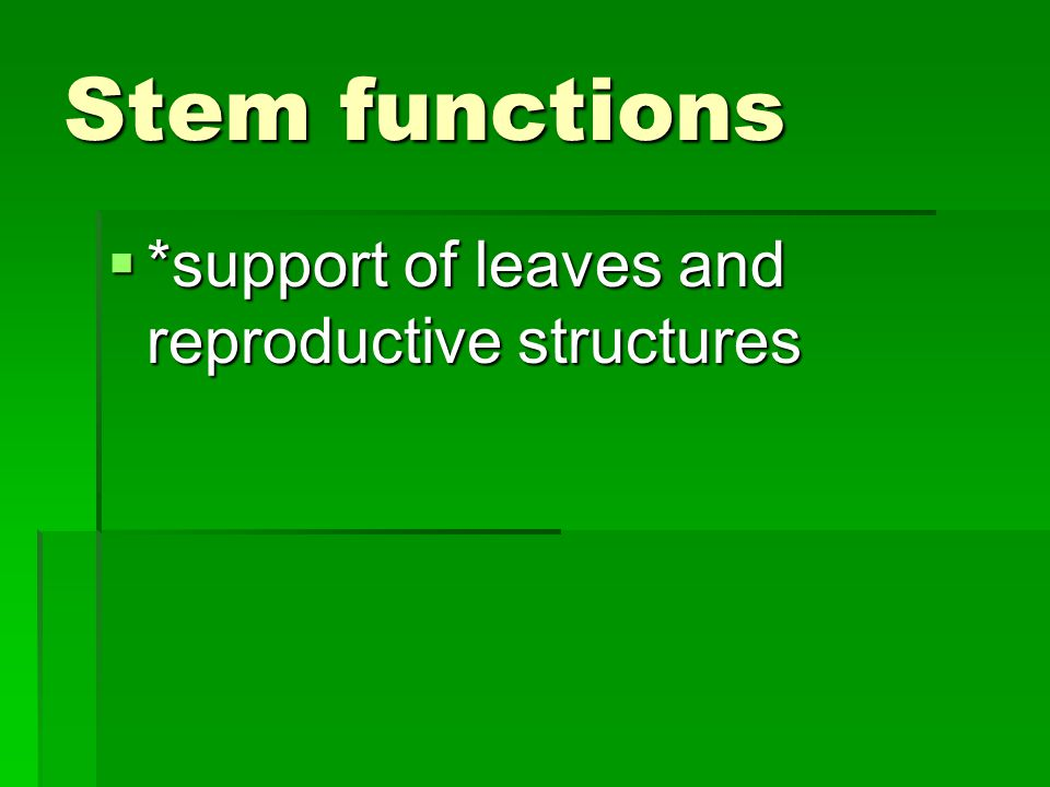 Stem functions *support of leaves and reproductive structures