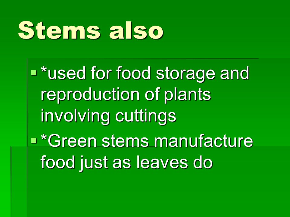Stems also *used for food storage and reproduction of plants involving cuttings.