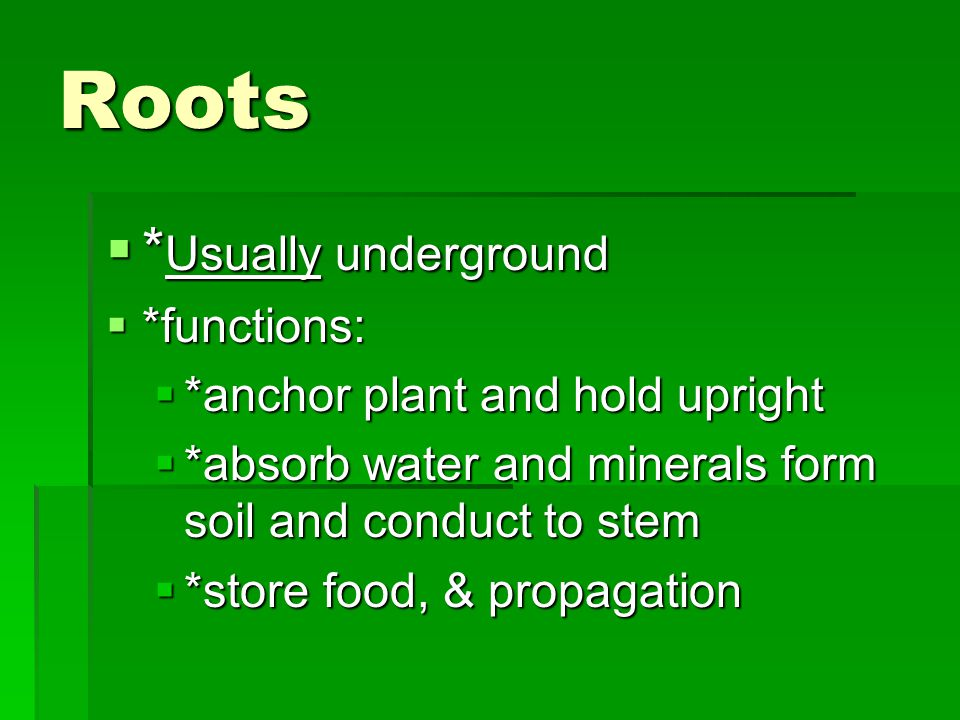 Roots *Usually underground *functions: *anchor plant and hold upright