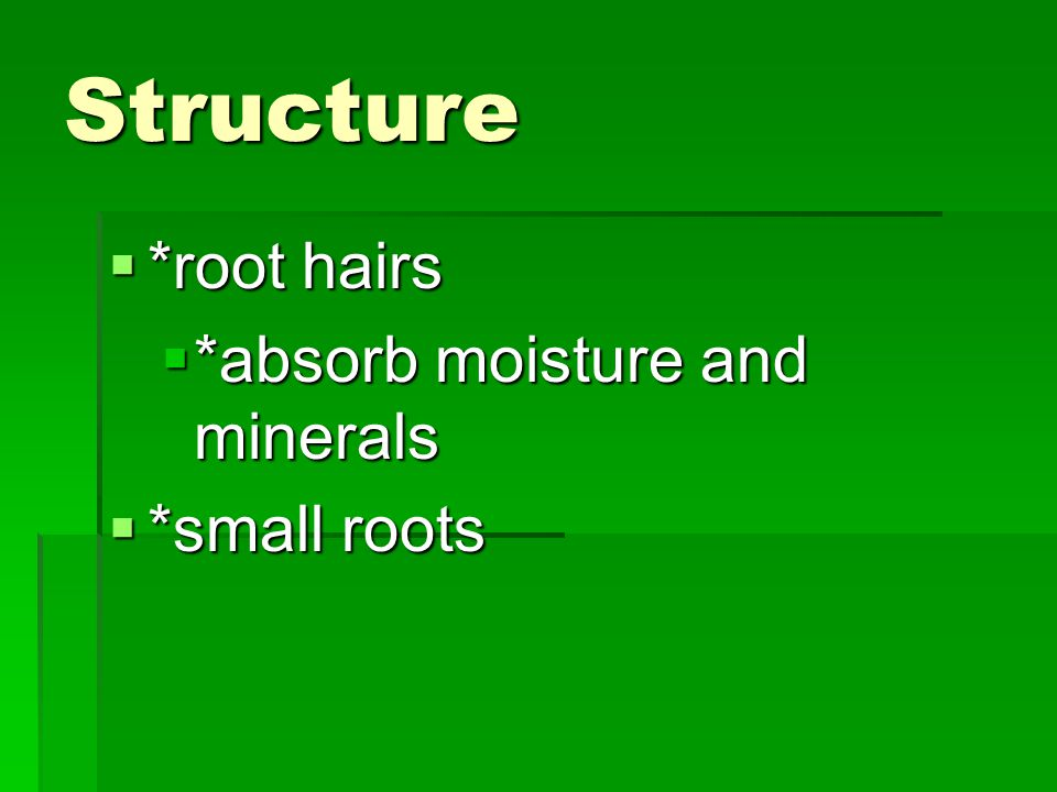 Structure *root hairs *absorb moisture and minerals *small roots