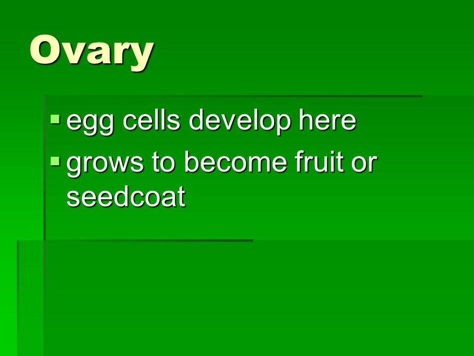 Ovary egg cells develop here grows to become fruit or seedcoat