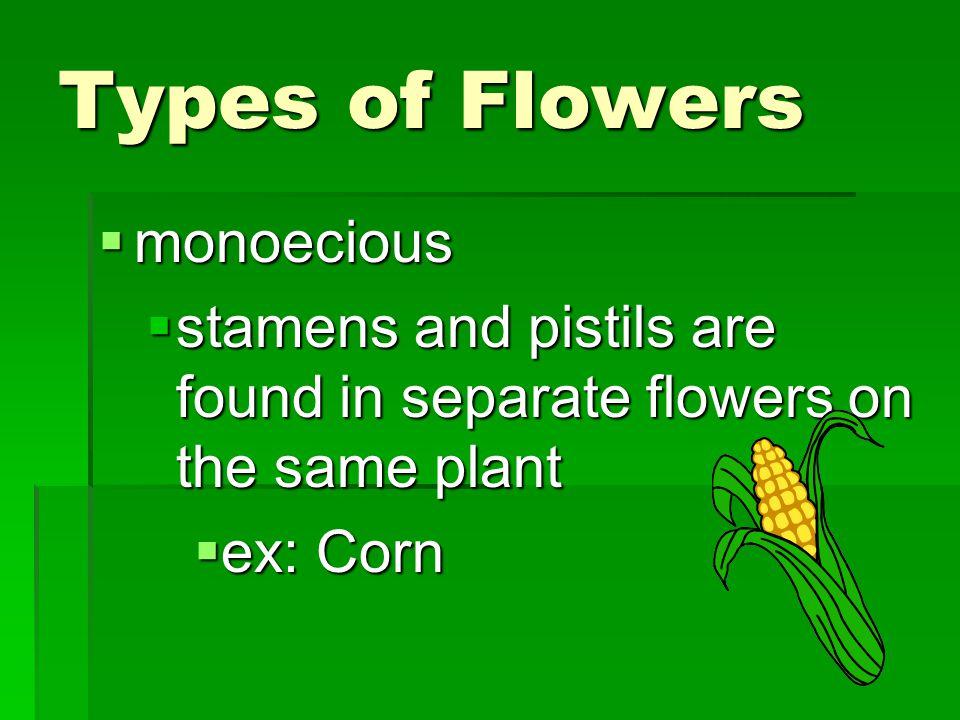 Types of Flowers monoecious