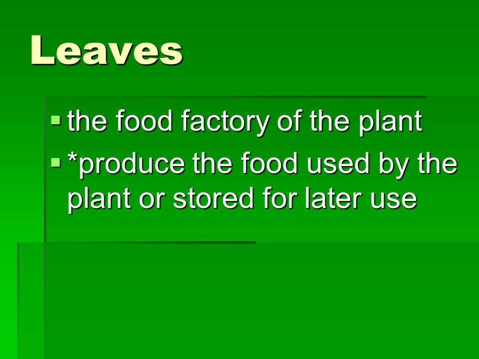 Leaves the food factory of the plant