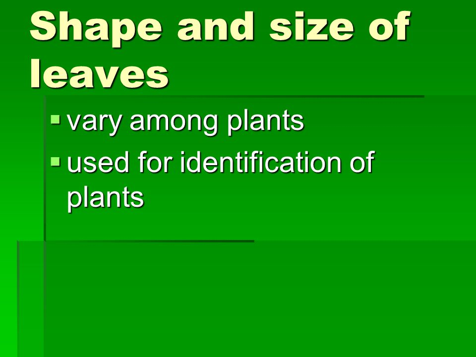 Shape and size of leaves