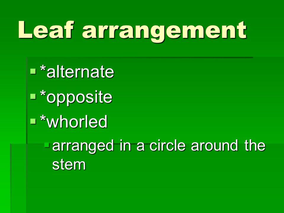 Leaf arrangement *alternate *opposite *whorled