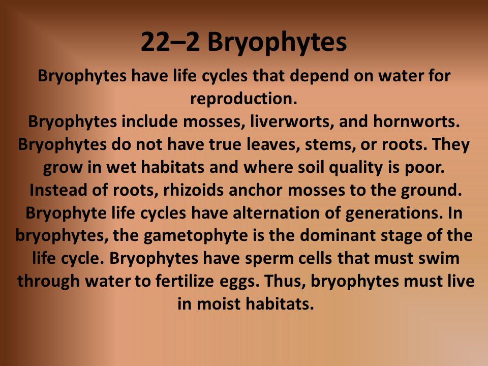 22–2 Bryophytes Bryophytes have life cycles that depend on water for reproduction. Bryophytes include mosses, liverworts, and hornworts.
