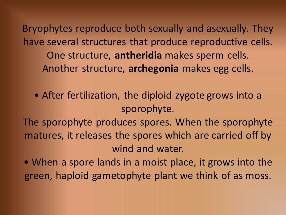 Bryophytes reproduce both sexually and asexually