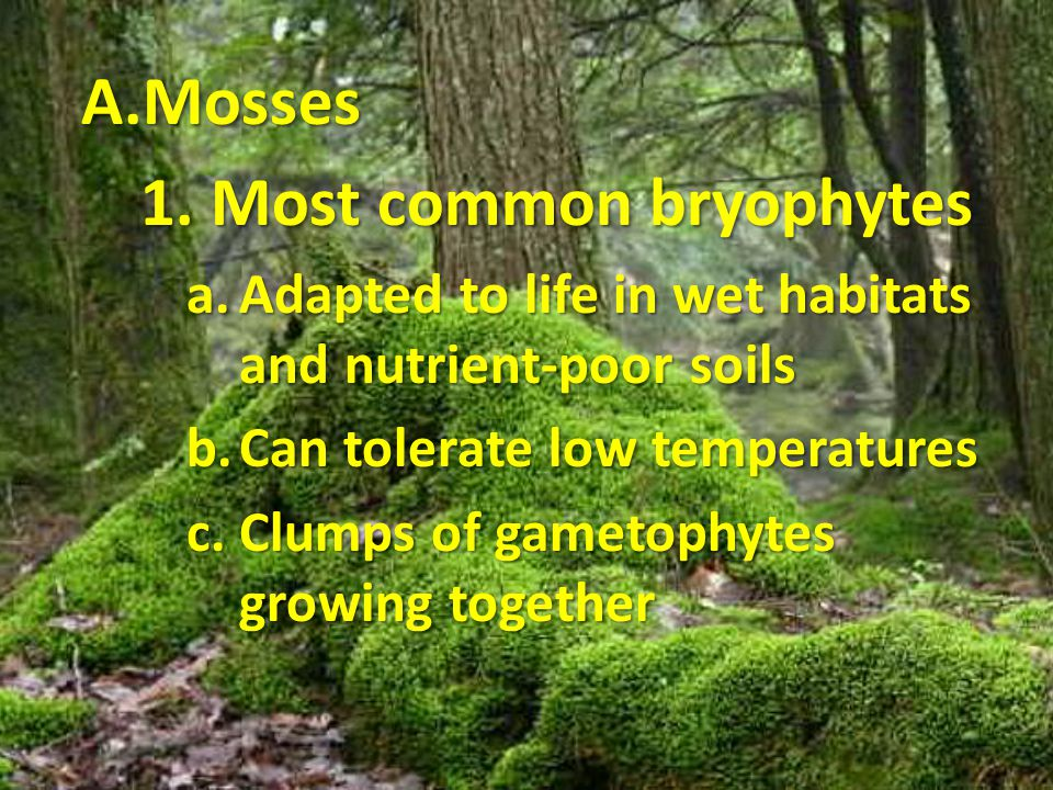 1. Most common bryophytes