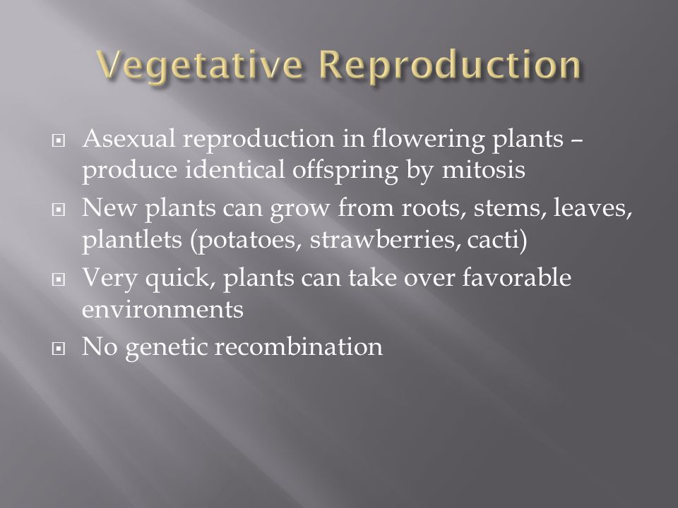 Vegetative Reproduction