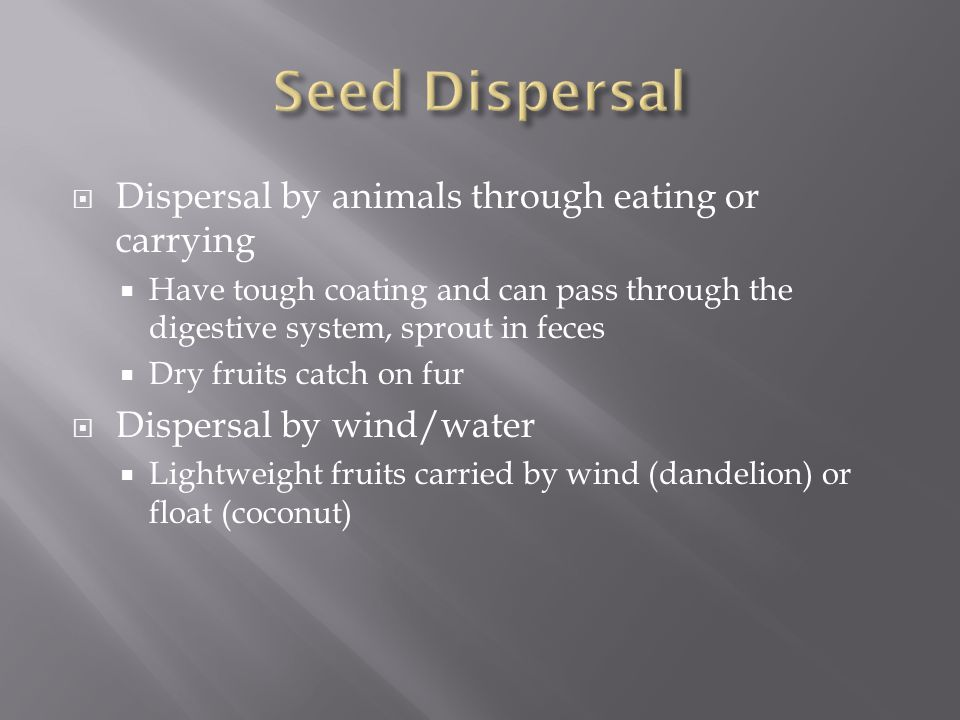 Seed Dispersal Dispersal by animals through eating or carrying