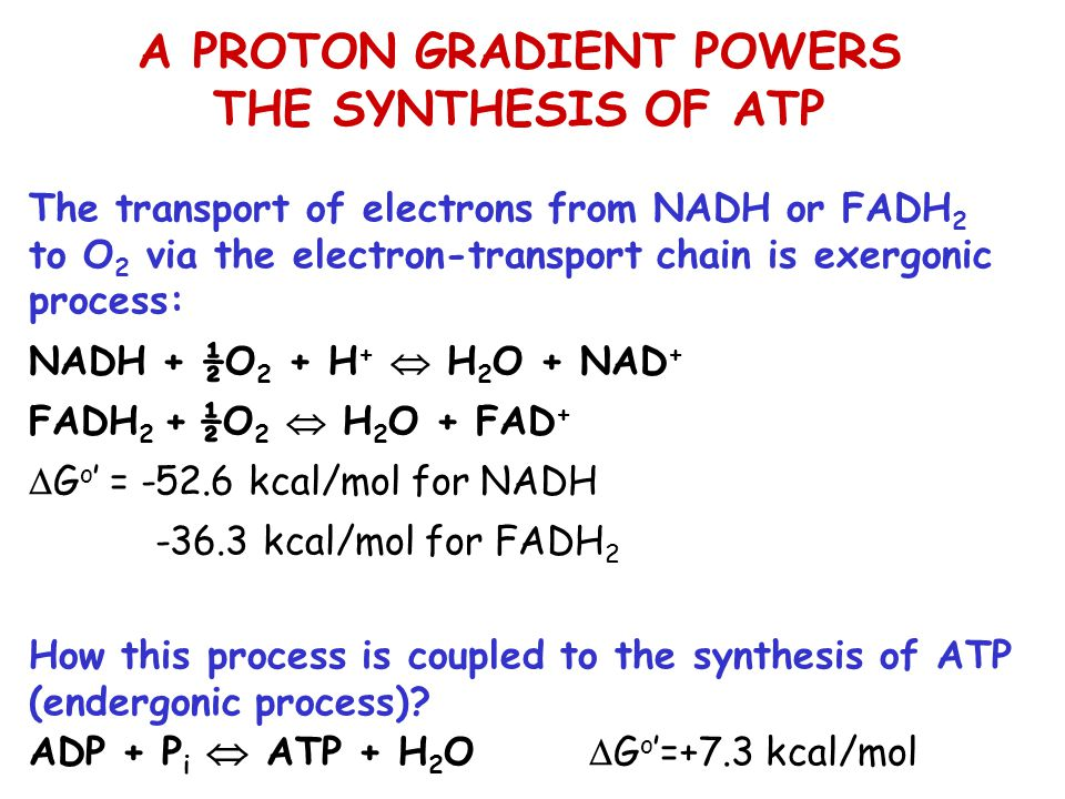 A PROTON GRADIENT POWERS THE SYNTHESIS OF ATP