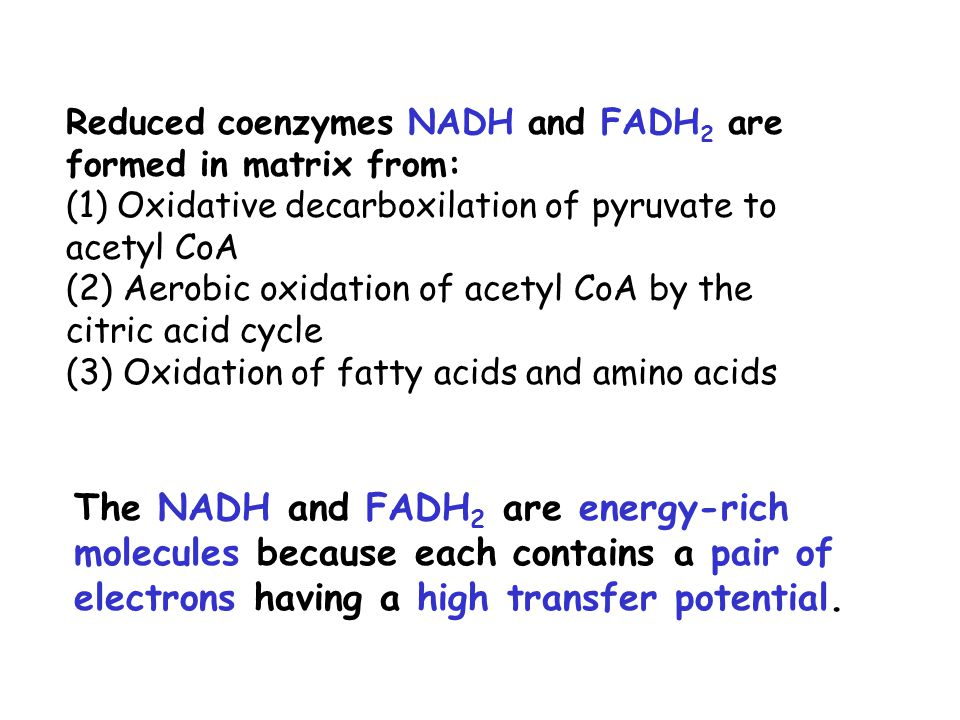 Reduced coenzymes NADH and FADH2 are formed in matrix from: