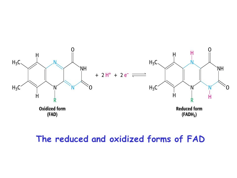 The reduced and oxidized forms of FAD