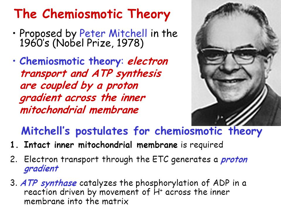 Mitchell's postulates for chemiosmotic theory