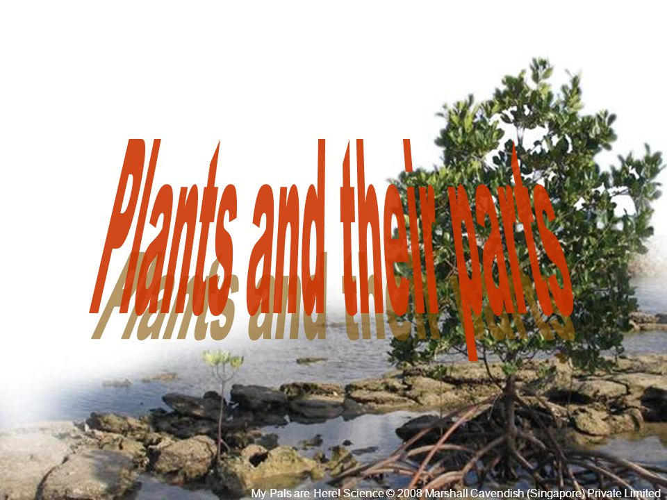 Plants and their parts My Pals are Here.