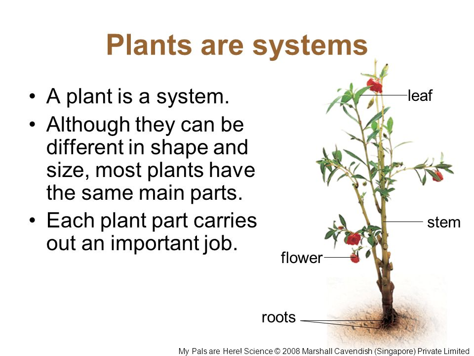 Plants are systems A plant is a system.