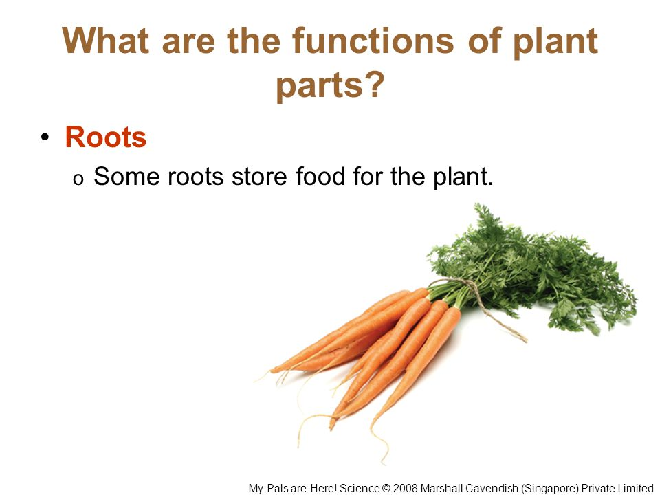 What are the functions of plant parts
