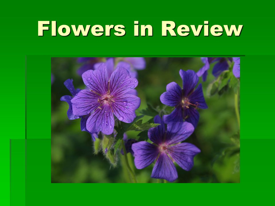 Flowers in Review