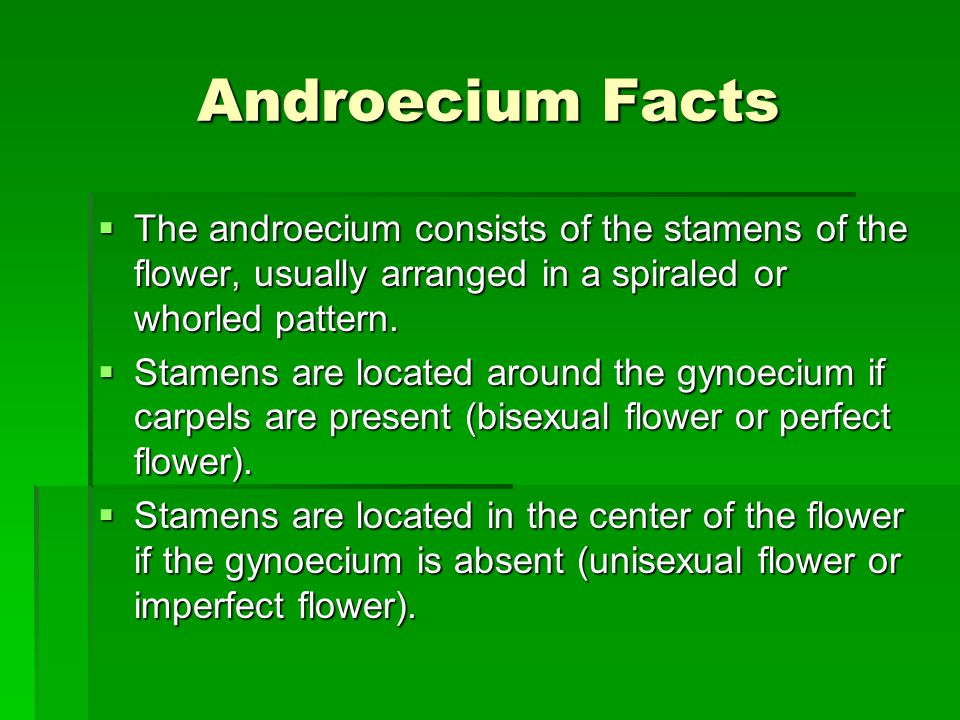 Androecium Facts The androecium consists of the stamens of the flower, usually arranged in a spiraled or whorled pattern.